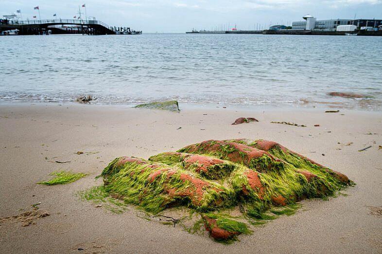 Stein und Algen am Strand von Helgoland